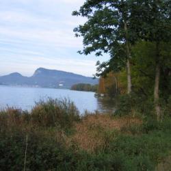 Au bord du lac de Joux
